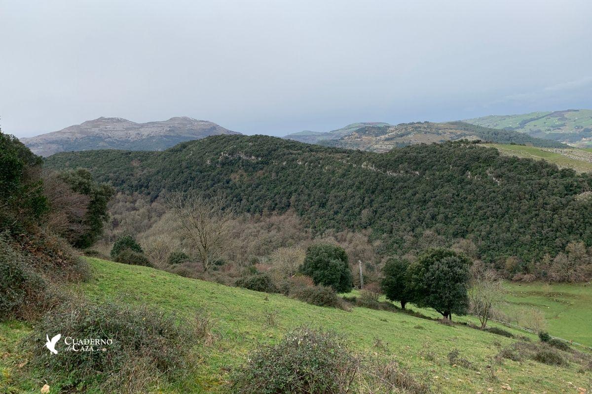Batida de corzo en Cantabria | Cuaderno de Caza